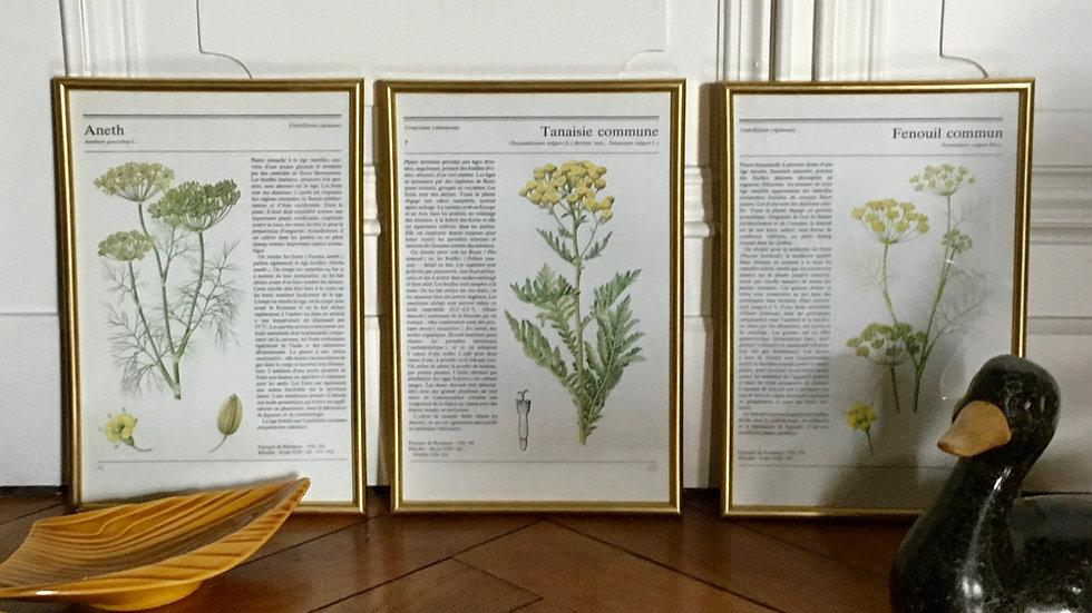 Lot 3 illustrations botanique encadrées doré vintage 3