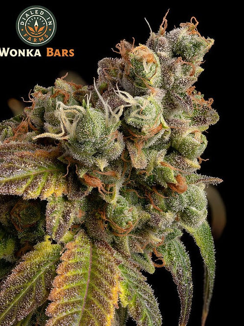 Wonky Bars - Chocolate Buds - Dialed In Farms