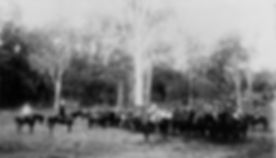 No4 Coy MI Pine Rivers 1894 SLQ24042.jpg