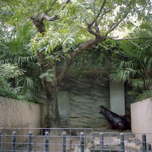 planet zoo #06