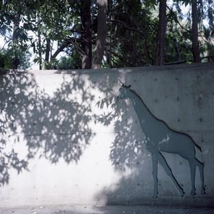 planet zoo #08