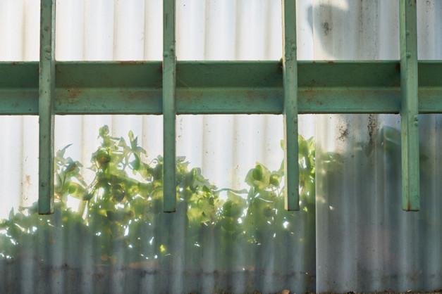urban nature #019