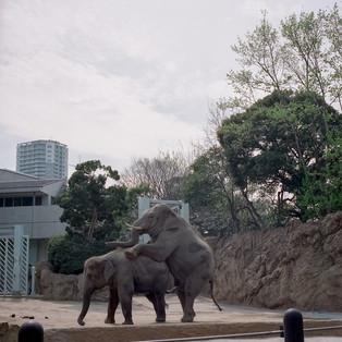 planet zoo #24