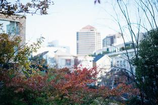 urban nature #006