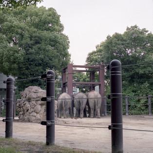 planet zoo #27