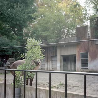 planet zoo #02