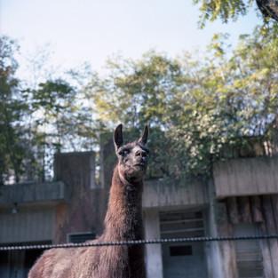 planet zoo #05