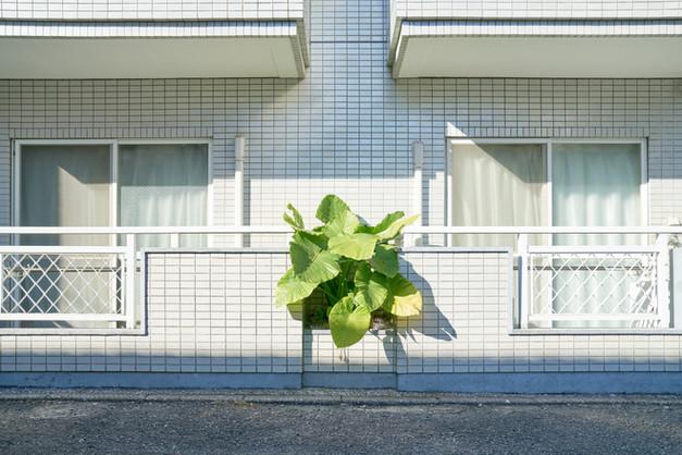 urban nature #012