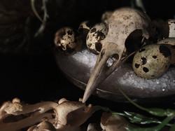Vogelkopf mit Eiern