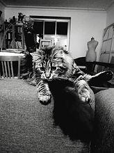 Poly 2019, le chat de l'artiste