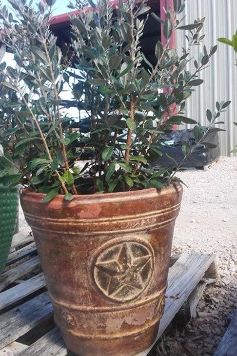 Texas Star Planter