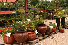 Local Wholesale Plant Nursery