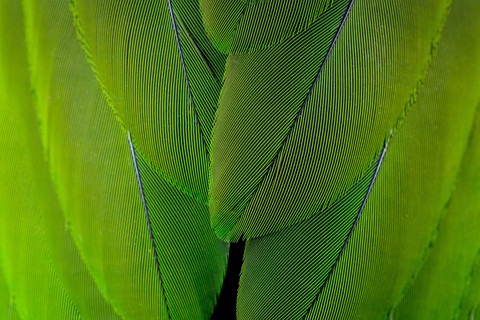 macro-photograph-green-colored-feathers-parrot.jpg