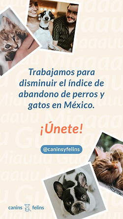 Canins - Story.png