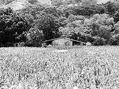 Mezcal_Solitito-oaxaca-Matatlán-mexico-a