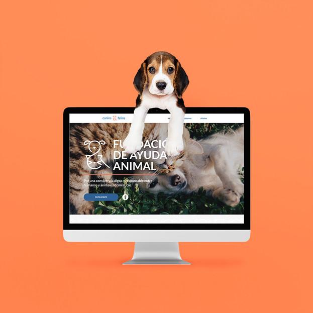 Canins y Felins