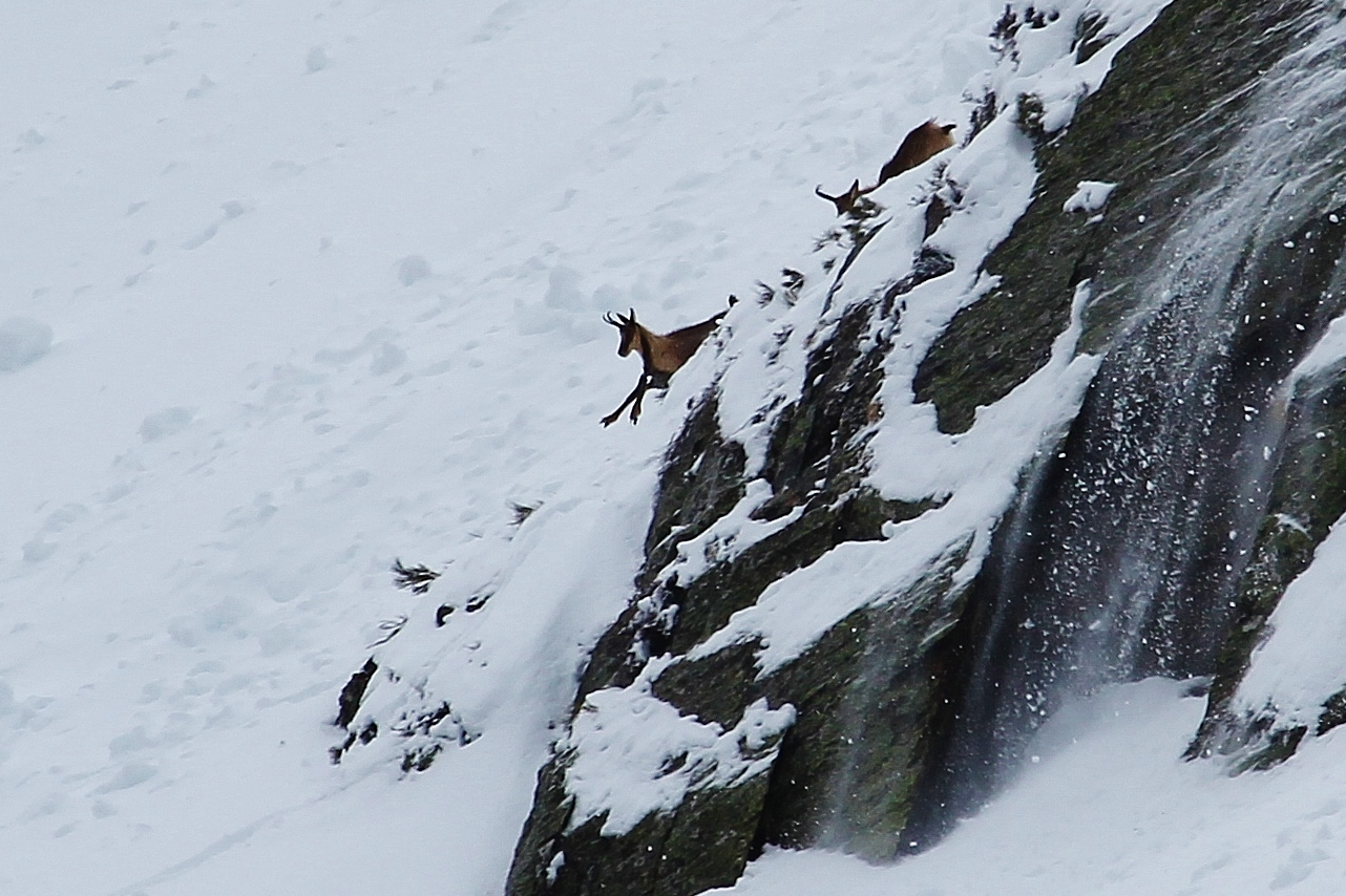 Rebeco saltando con nieve