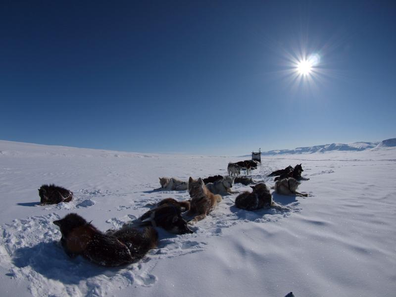 Innuit trineo de perros al sol