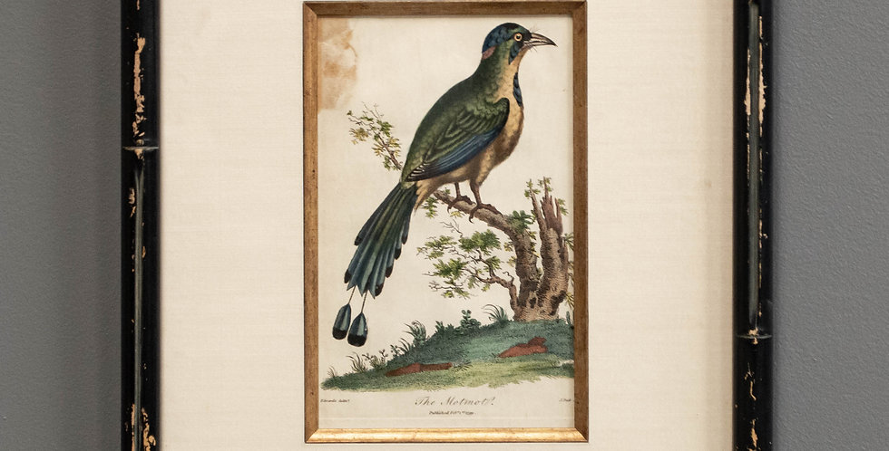 Antique Hand Colored Bird Engraving