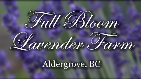 Full Bloom Lavender Farm.mp4