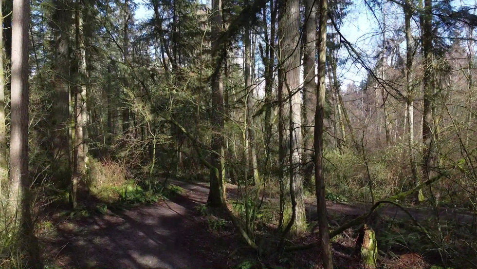 Sunnyside Acres Urban Forest.mp4