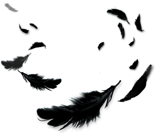 crow-feather-png-3.png