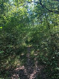 chemin_de_forêt.jpeg