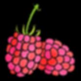 raspberries, organic