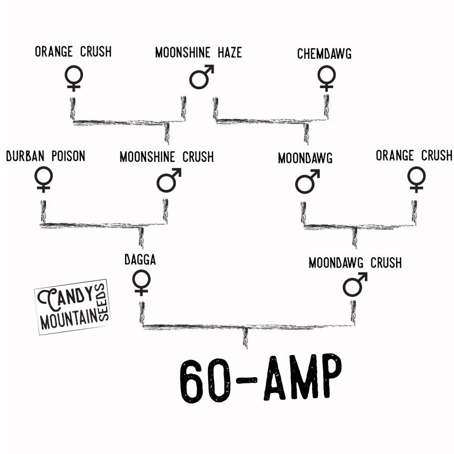 60 amp.jpg