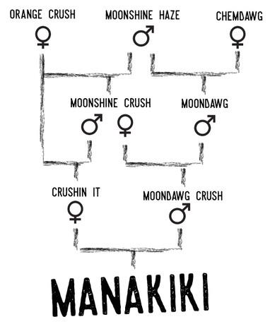 manakiki tree.jpg