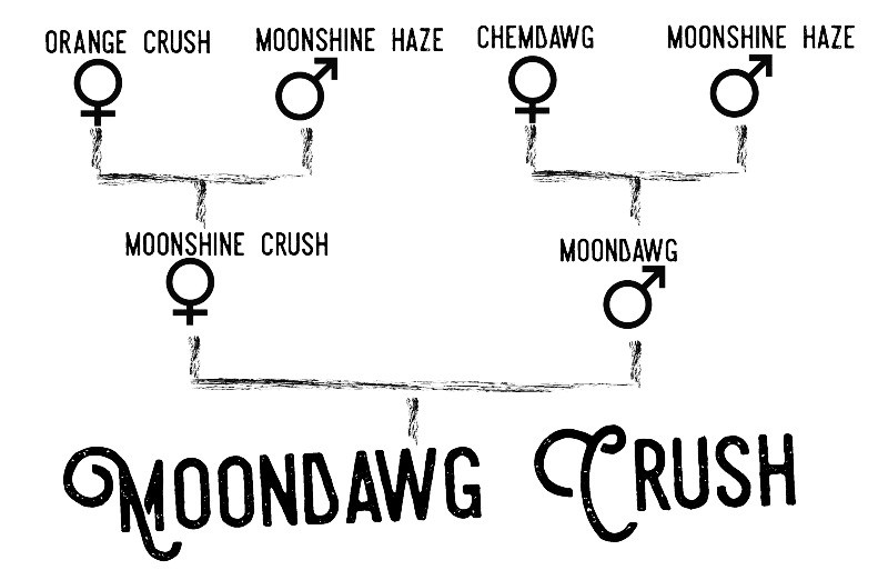moondawg crush web_edited_edited.jpg