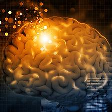 adult-brain.jpg