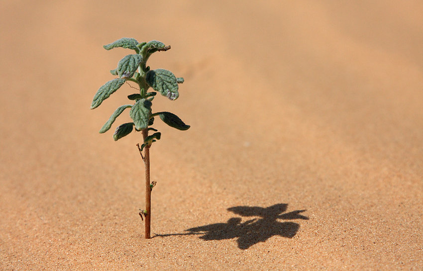 Desert roślin