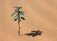 Planta de desierto