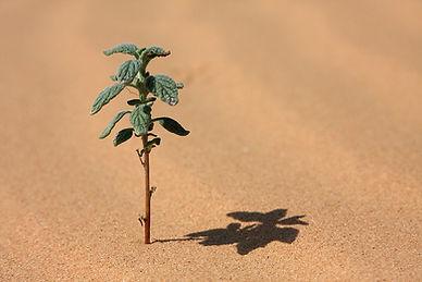 Installatie van de woestijn