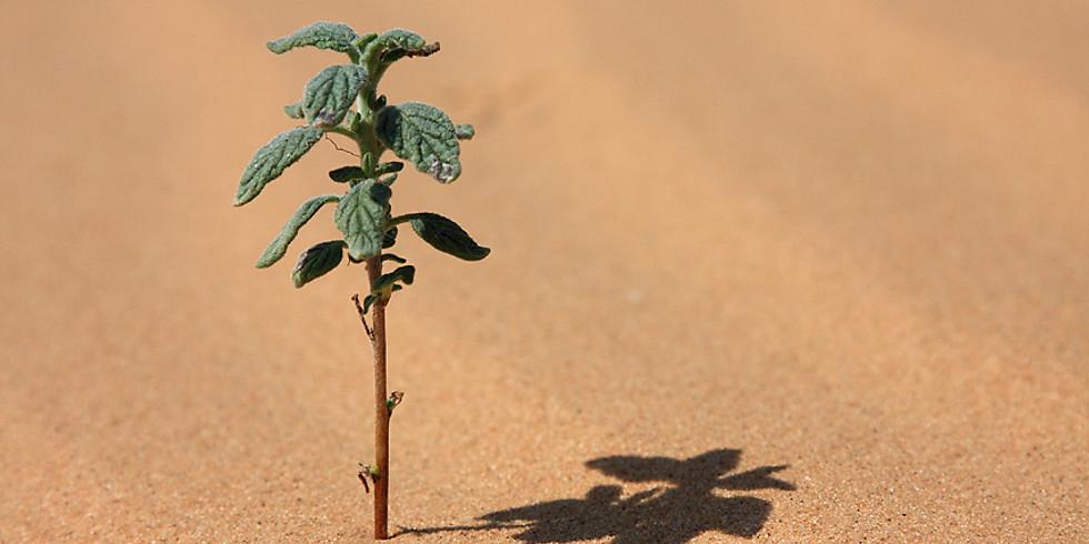 Strength Following Adversity: Exploring Post Traumatic Growth