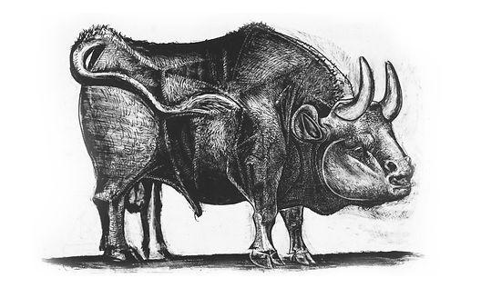 picasso-bull-product-design-.jpg
