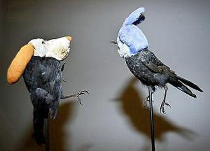 annette_messager_oiseaux-large.jpg