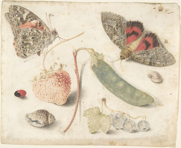 Studies_of_Fruits,_Insects_and_Shells_ME