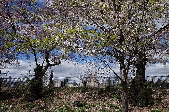 Marla Mossman Cental Park.jpg