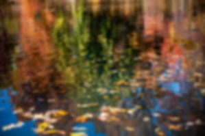 leaves on water.jpg