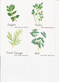 Herbs 2 - Watercolor