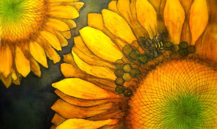 Honeybee on Sunflower.jpg