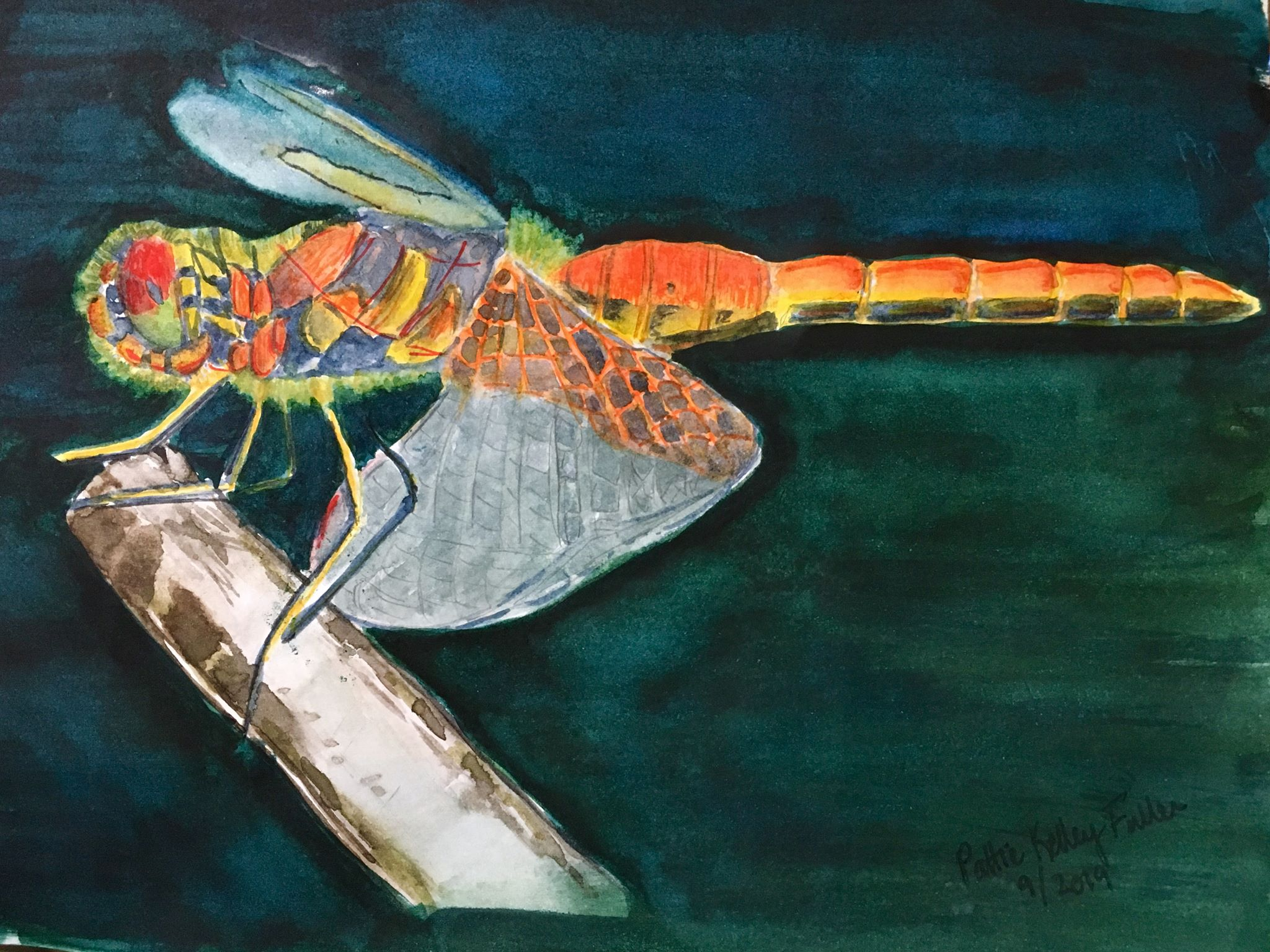 Dragonfly - watercolor and ink