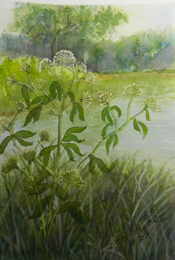 Queen Anne's Lace (For Display only - No sale) - Watercolor