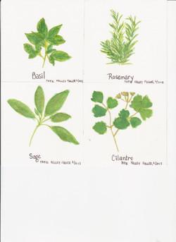 Herbs 1 - Watercolor