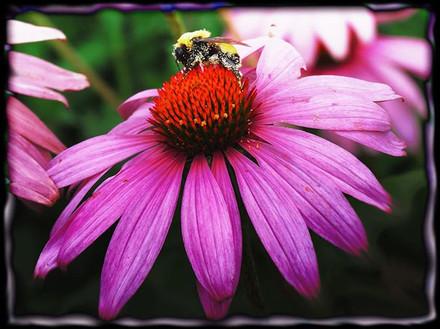 Purple Pollination
