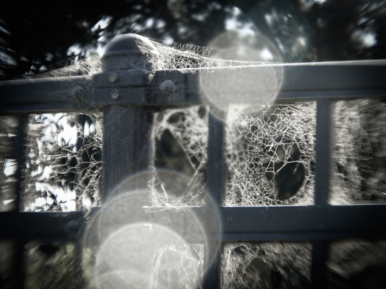 Web Fence