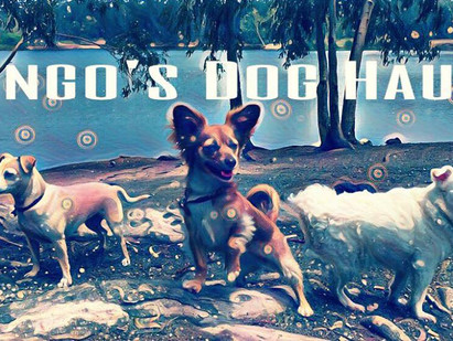 Welcome to the Dog Haus!