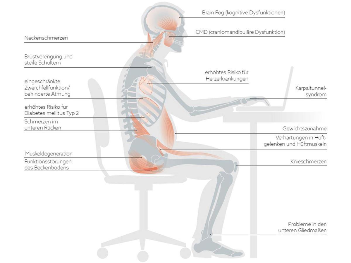 Tolle Hüftmuskel Diagramm Ideen - Menschliche Anatomie Bilder ...